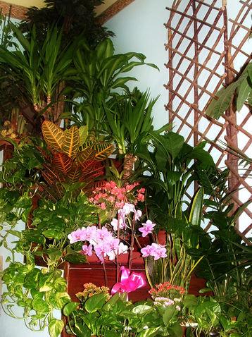 angolo piante