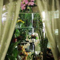 fiori freschi 10