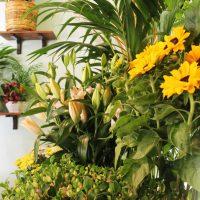fiori freschi 3