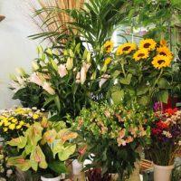 fiori freschi 8